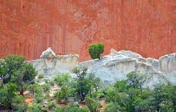 Drzewny dorośnięcie w skałach z piaskowem i wapniem przy ogródem bóg Colorado Springs piaskowiec Zdjęcie Stock