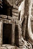 Drzewny doro?ni?cie na Angkor Wat ?wi?tyni obraz royalty free