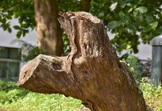 Drzewny drewno fotografia royalty free