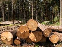 Drzewny felling Zdjęcie Stock