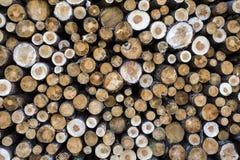 Drzewny felling Zdjęcia Royalty Free