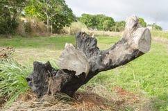 drzewny fiszorek zdjęcia royalty free