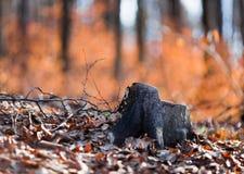 Drzewny fiszorek Obrazy Stock