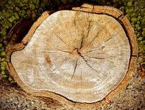 Drzewny fiszorek, Drewniana tekstura Zdjęcie Royalty Free
