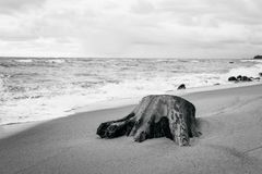 Drzewny fiszorek na brzeg morze ba?tyckie royalty ilustracja