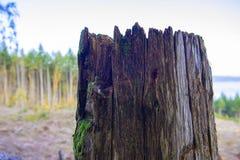 Drzewny fiszorek na górze góry przy wyróbki miejscem w Vancouver wyspie, Kanada zdjęcia stock
