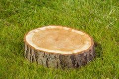 Drzewny fiszorek na trawie Obraz Royalty Free