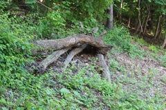 Drzewny fiszorek w Fairmount parku obraz stock