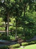 Drzewny gaj Zdjęcia Royalty Free