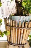 Drzewny garnek Obrazy Royalty Free