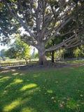 Drzewny gigant obraz royalty free