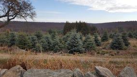 Drzewny gospodarstwo rolne Zdjęcia Royalty Free