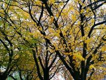 Drzewny grzebień przy spadkiem Obrazy Stock