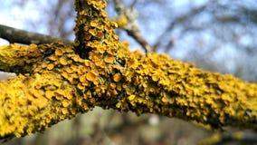 Drzewny grzyb obrazy royalty free