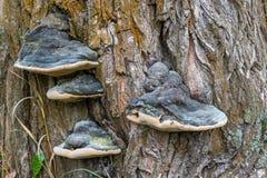Drzewny grzyb zdjęcie stock