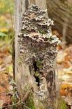 Drzewny grzyb fotografia stock