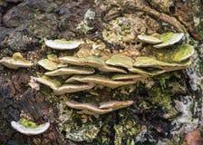 Drzewny grzyb fotografia royalty free