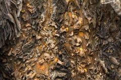 Drzewny grzyb na drzewnych bagażnikach obrazy royalty free