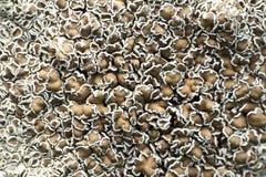 Drzewny grzyb na drzewnych bagażnikach obrazy stock