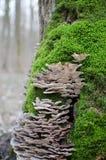 Drzewny grzyb w naturalnym środowisku z zielonym mech wokoło go Zdjęcie Royalty Free
