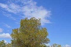 Drzewny I Chmurny niebieskiego nieba tło Obraz Royalty Free