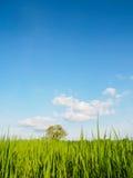 Drzewny i ryżowy fram Obrazy Stock