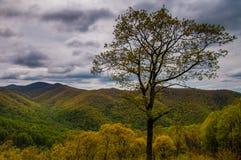 Drzewny i wczesny wiosna widok Błękitna grań w Shenandoah parku narodowym, Virginia. Fotografia Stock