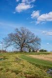 Drzewny i Wiejski pole obraz stock
