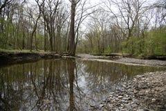 Drzewny jeziorny do góry nogami zdjęcia stock
