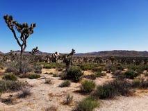 Drzewny Joshua Park Narodowy, USA obraz stock