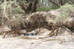 Drzewny kąpanie na nadmorski obrazy stock