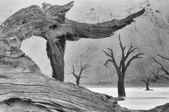 Drzewny kościec przy Deadvlei monochrom Obraz Royalty Free