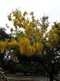 Drzewny kolor żółty Zdjęcie Royalty Free