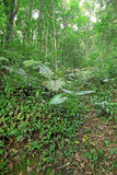 Drzewny las podczas wiosny Fotografia Stock