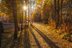 Drzewny las w jesieni żółtej pomarańcze opuszcza na ziemi Fotografia Stock