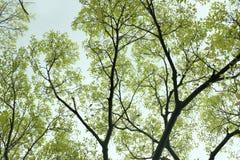 Drzewny liść Obraz Stock