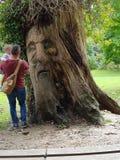 Drzewny m??czyzna zdjęcie royalty free