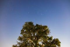 Drzewny mango wierzchołek w nocnym niebie z gwiazdą obraz stock