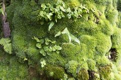 Drzewny mech forrest z pięknymi kolorami Zdjęcie Stock