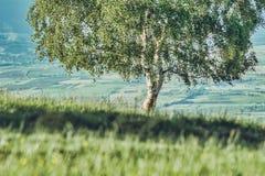 Drzewny na wzgórzu z zieloną trawą samotnie zdjęcie royalty free
