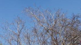 Drzewny narture piękna scenka Zdjęcie Royalty Free