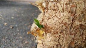 Drzewny Narute Zdjęcia Stock
