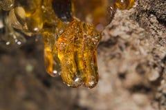 Drzewny naturalny złocisty żywica zdjęcie stock