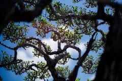 Drzewny śniadanio-lunch i urlopu znowu niebieskie niebo Fotografia Stock