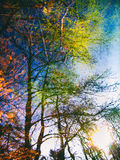 Drzewny odbicia tło Zdjęcia Stock