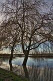 Drzewny odbicie w wodzie powodziowej Fotografia Royalty Free