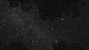Drzewny odgórny gwiaździsty nocnego nieba timelapse zbiory
