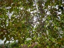 Drzewny okno Zdjęcie Stock