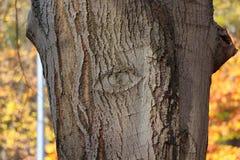 Drzewny oko Fotografia Stock