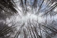 Drzewny okrąg od dna z niebieskim niebem Zdjęcia Royalty Free